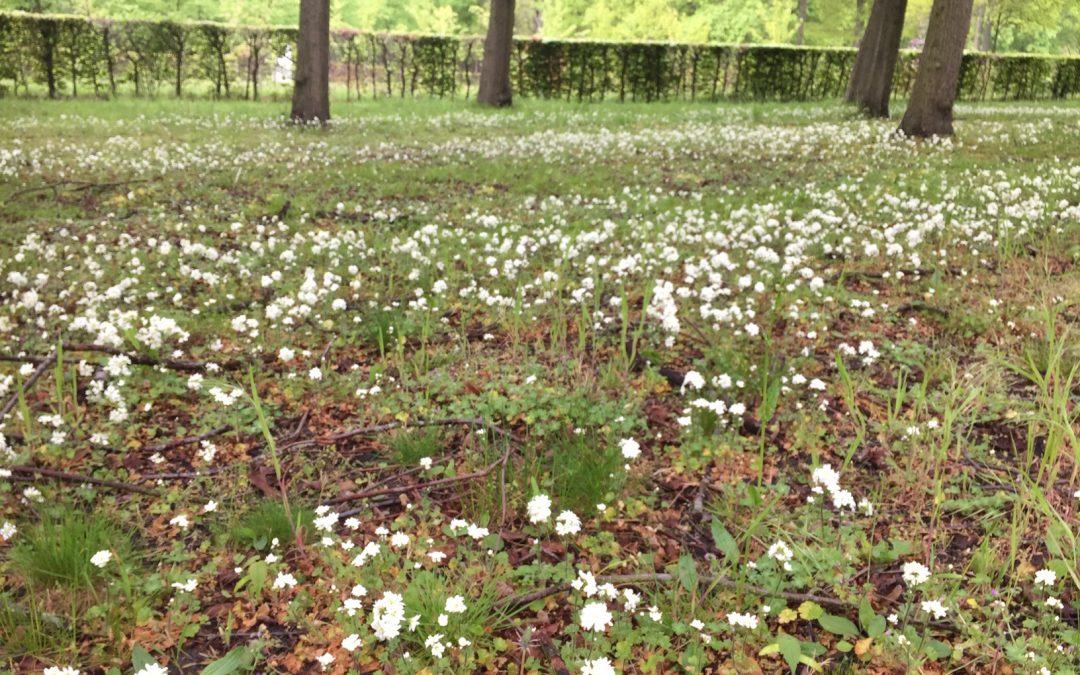 Haarlems Klokkenspel bloeit weer in Beeckestijn