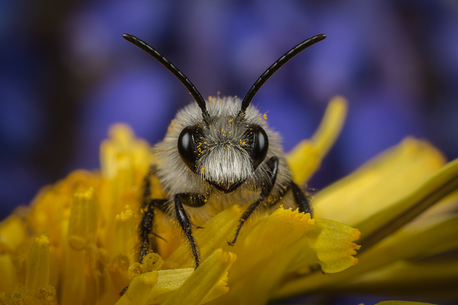 Natuurmonumenten maakt zich zorgen om verdwijnen van leefgebied van insecten in steden en dorpen